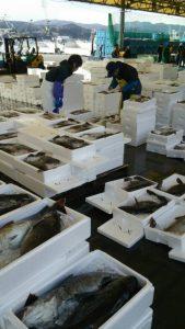 「寒鱈のせり」志津川漁港より