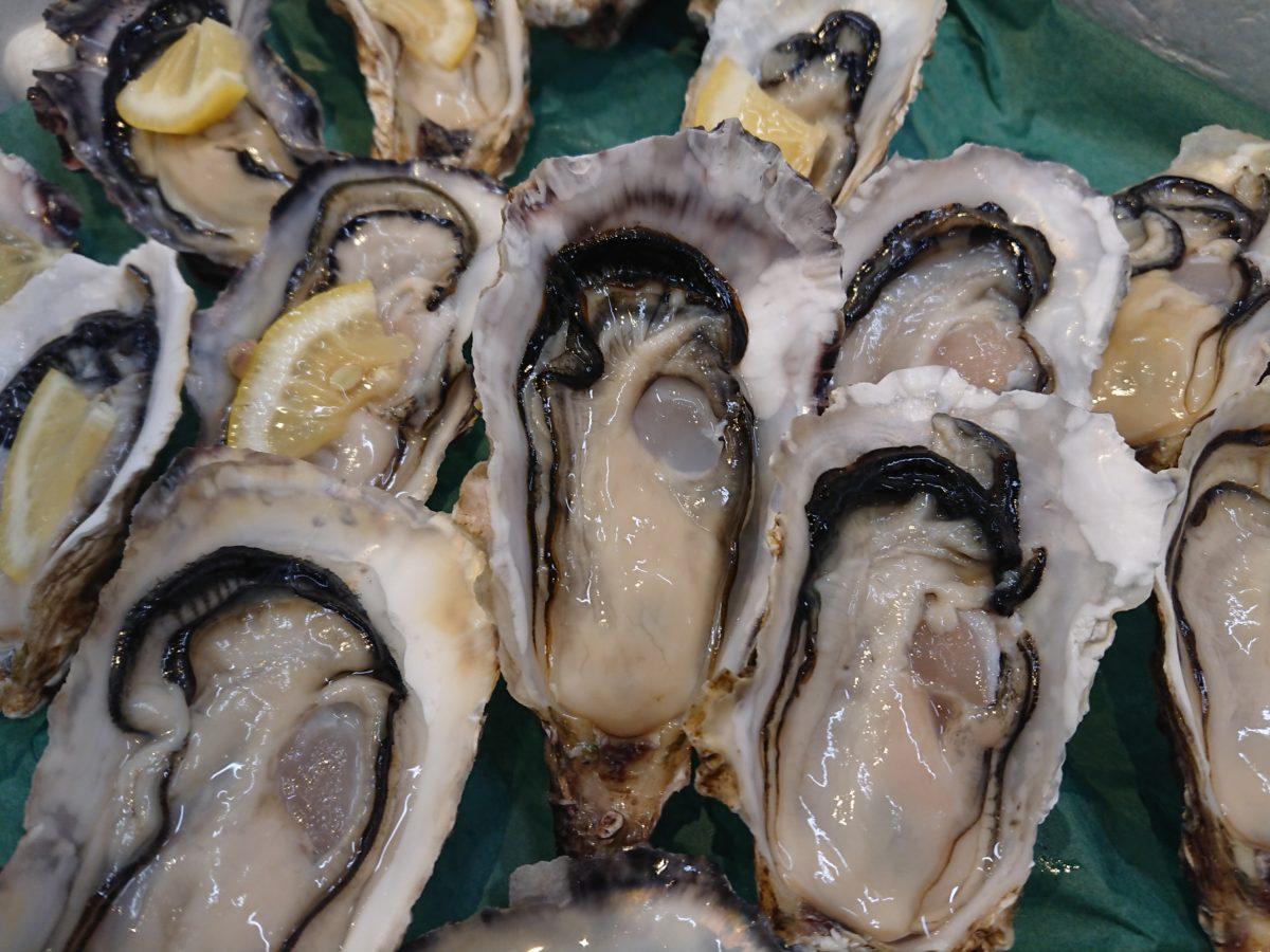 今年初入荷!宮城県の新名産『あまころ牡蠣』販売開始!