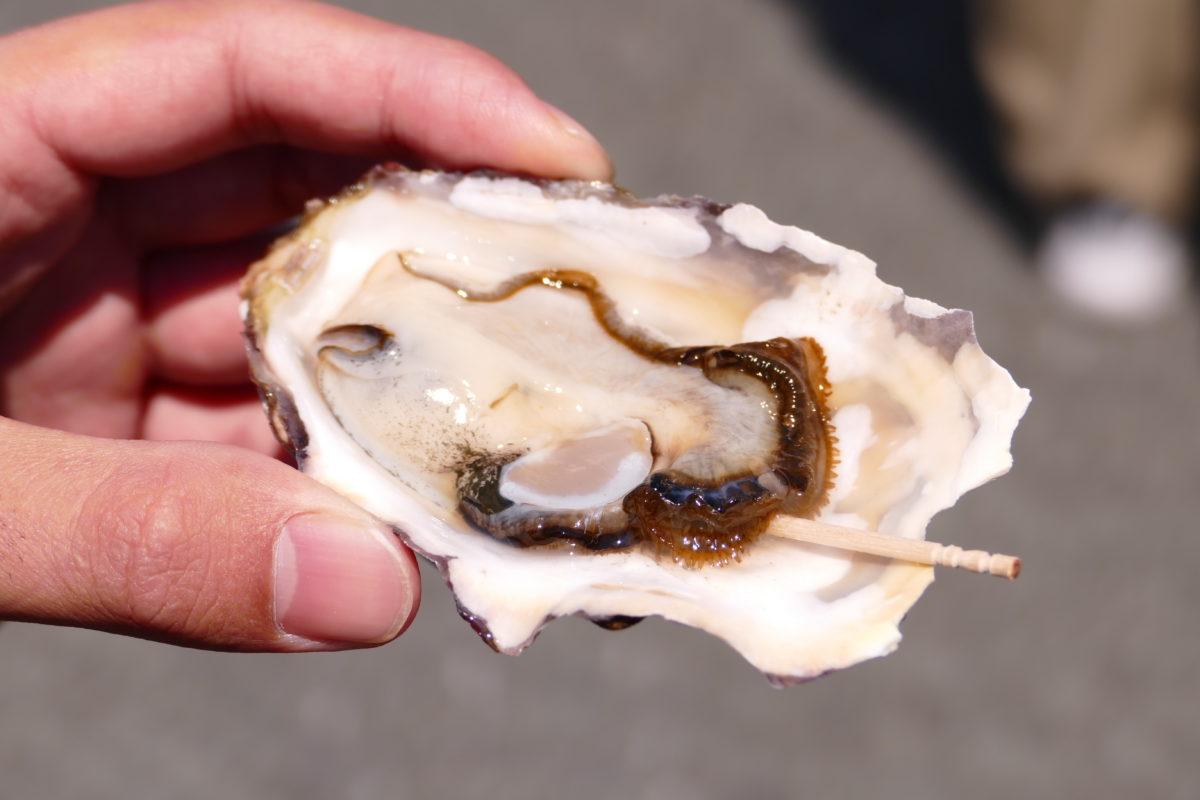 『あまころ牡蠣』無料試食会&『倉井克幸』シャンソンライブなど週末イベントの様子!