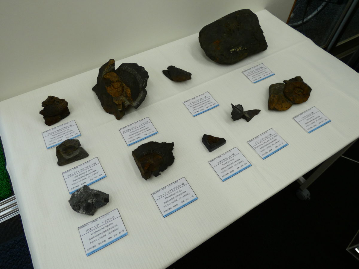 さんさん商店街インフォメーションセンターにて『貴重な化石』を展示中!